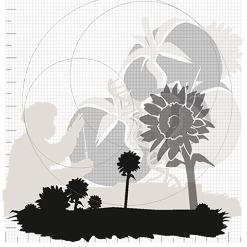 Sunflowers, petals, and person exploring. Black and white three-dimensional picture.