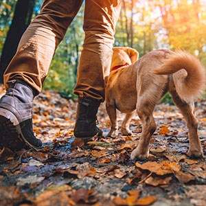 Man hiking in autumn in a colorful forest with a dog.