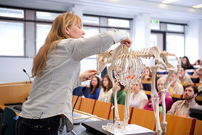 Teacher shows animal skeleton during a lecture, photo.